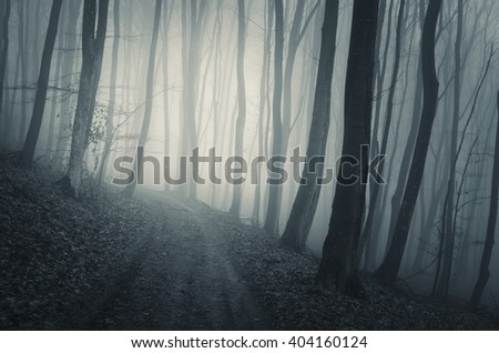 forest path in fog - stock photo
