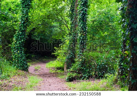 Forest path in Galicia - stock photo
