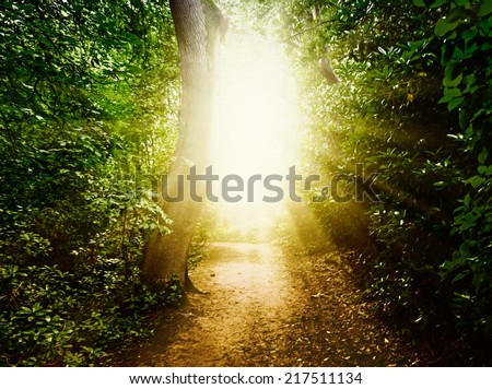 Forest path in the woods - stock photo