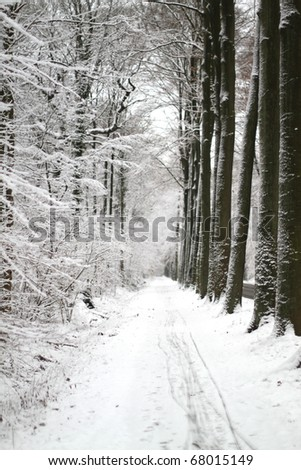 forest path in winter snow - stock photo