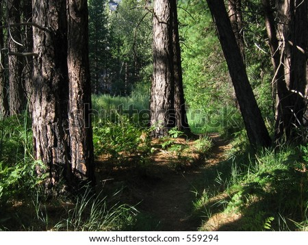 Forest Path, Kings Canyon