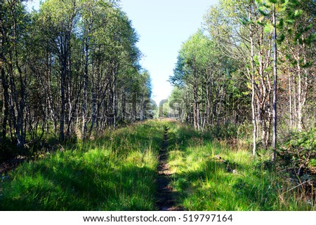 Forest path landscape background