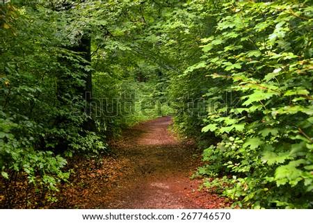 Forest path on the Kapuzinenberg, Salzburg, Europe - stock photo