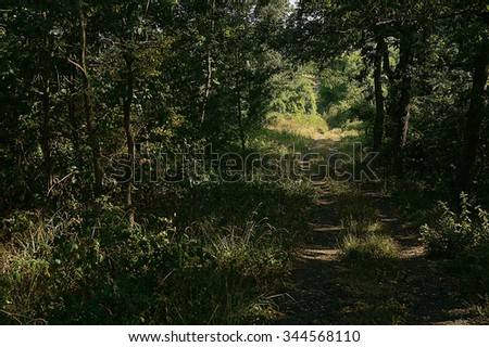 Forest path opens onto a sunny meadow.
