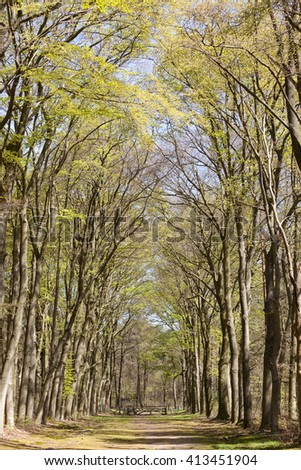 forest path under beech trees on sunny day in spring in the netherlands near hilversum - stock photo