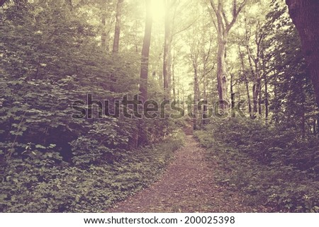 Forest path vintage style - stock photo