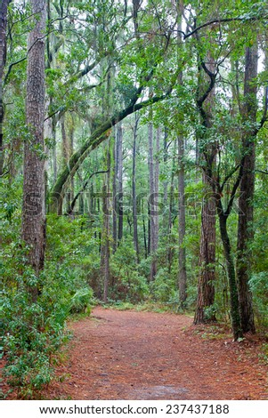 Forest path with a canopy of trees and Spanish moss including live oaks in South Carolina . - stock photo