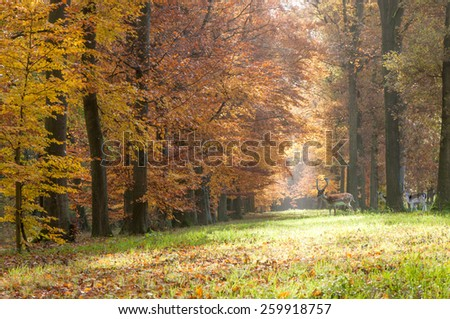 Forest pathway in the autumn with several deer