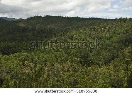 forest, pine, tree, nature, green, background, landscape, evergreen, trees, natural, outdoor, nobody, scenic, mountain, foliage, sky, fresh, coniferous, day, rural - stock photo