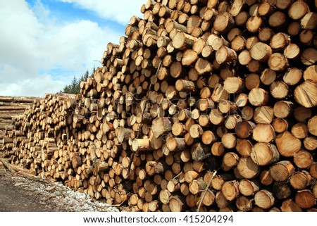 Forest pine trees log trunks felled by the logging timber industry - stock photo