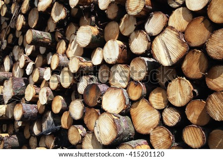Forest pine trees logs background felled by the logging timber industry - stock photo