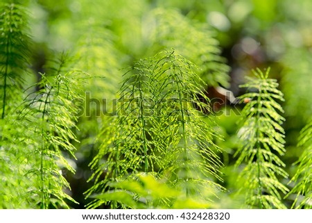 Forest plants and wildflowers on abstract natural background. Shallow depth of field. Selective focus. Toned.