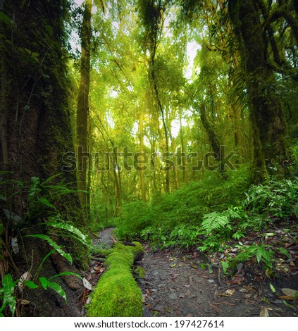 Forest plants, green natural background. Outdoor photography. The focus is on the front part of the image  - stock photo