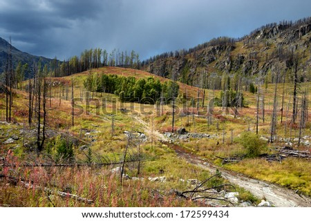 Forest recovering after a fire in the mountains of Altai, Kazakhstan