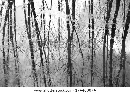 Forest reflection on water surface (black and white photo)