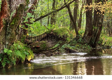 forest river - stock photo
