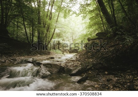 forest river and lush vegetation - stock photo