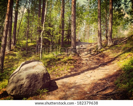 forest road and stone - stock photo