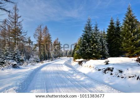Forest road at winter sunny day