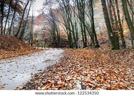 Forest road covered in moorland late november