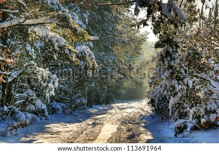 Forest road covered with snow in winter