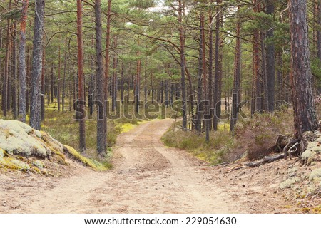 Forest road going through pine forest - stock photo