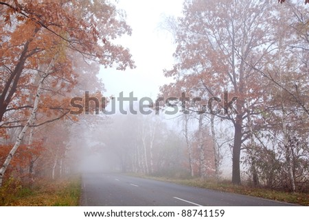 Forest road in a foggy autumn day. - stock photo
