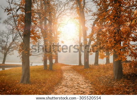 Forest road in autumn forest - stock photo