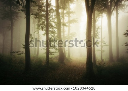 forest road in morning light