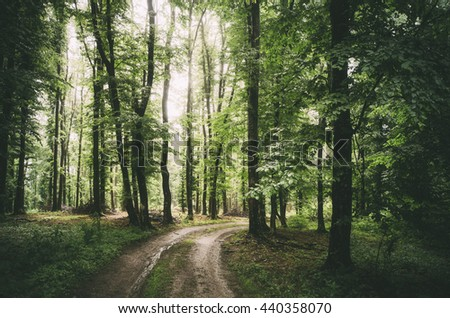 forest road in summer - stock photo