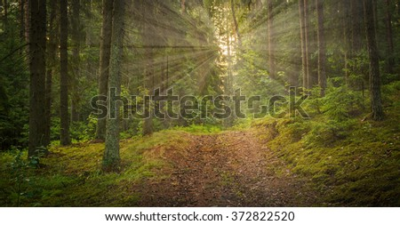forest road in summer under sun - stock photo