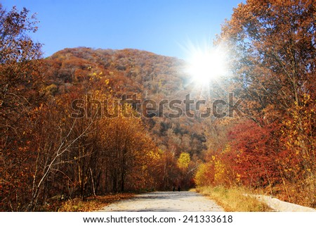 Forest road in the autumn, closeup of photo