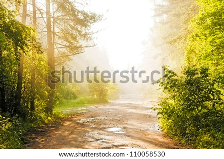 Forest road in the fog - stock photo