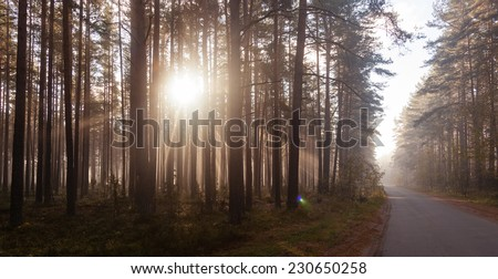 Forest road in the morning