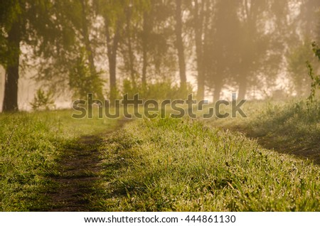 forest road in the morning mist. thick morning fog in the summer forest. thick morning fog in the forest at pond.Morning landscape in summer thick fog.dense fog in the morning.forest hiding in the fog - stock photo