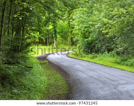 Forest road. Landscape. - stock photo