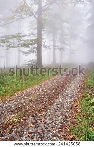 Forest road leading misty beech forest - stock photo