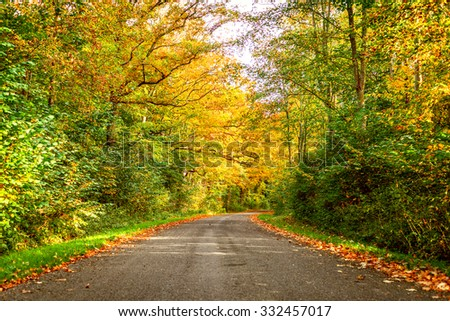 Forest road surrounded by colorful trees in the fall