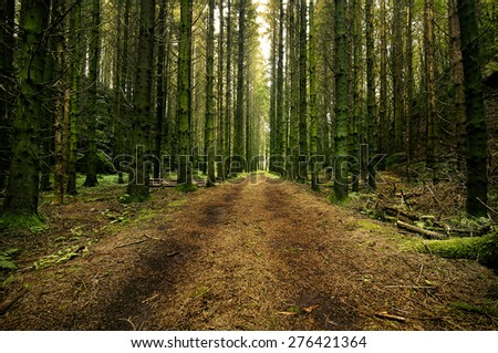 Forest road through a swedish forest - stock photo