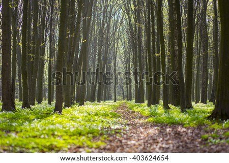 Forest road, trail. Morning sunlight - stock photo