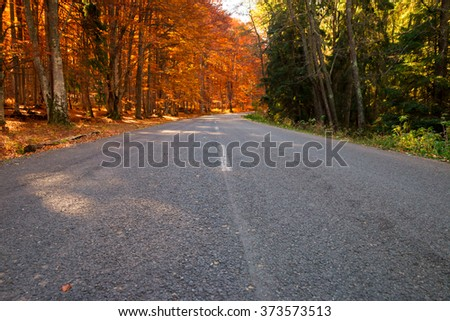Forest road with orange, deciduous trees on one side, and green on the other.