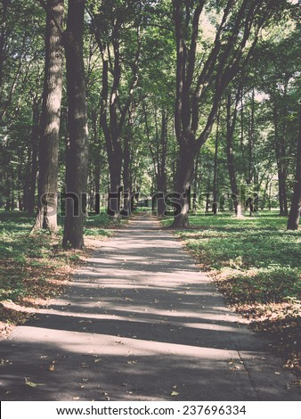 forest road with sun rays in summer - retro, vintage style look - stock photo