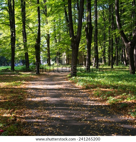 forest road with sun rays in summer - square image - stock photo