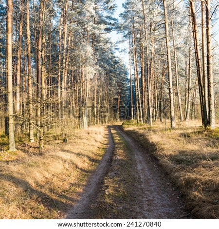 forest road with sun rays in the morning in the countryside - square image - stock photo