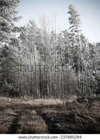 forest road with sun rays in the morning in the countryside. vintage retro monochrome look - stock photo