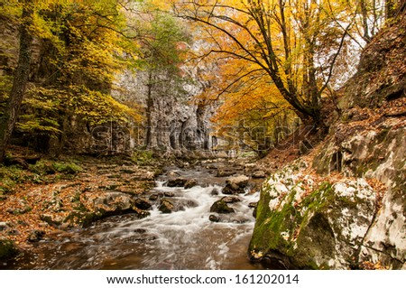 Forest scene near the Bigar waterfall from Romania