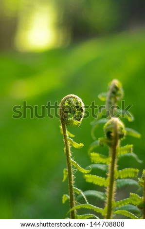 Forest Scene With Ferns And Copy Space - stock photo