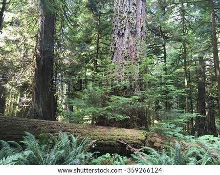 Forest Scenery in British Columbia Canada; natures beauty as its best in a peaceful setting.