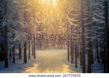 Forest ski-trackOrange sun above the ski-path - stock photo