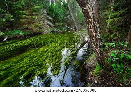 Forest spring at the begining of hte river in Endla nature park, Estonia